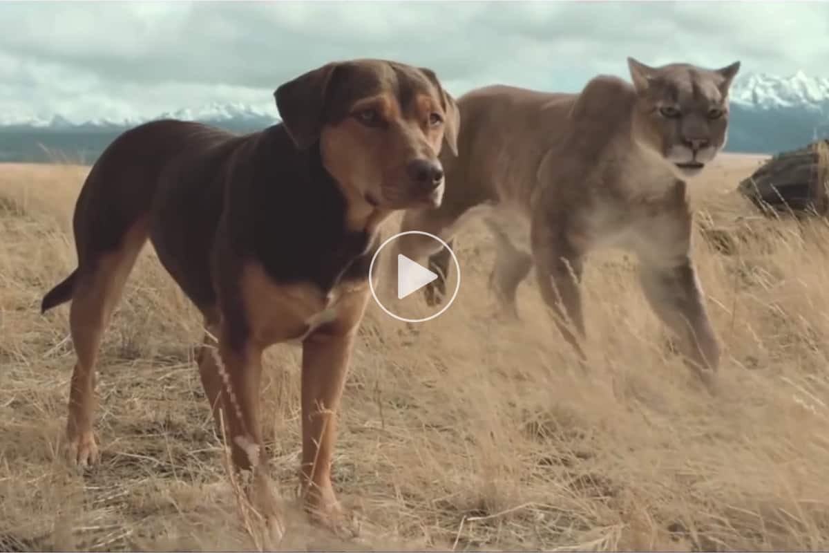 a-dog-s-way-home-official-trailer